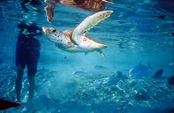 Lagune Méridien Bora Bora